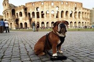Hamiltons Bulldogge Roscoe
